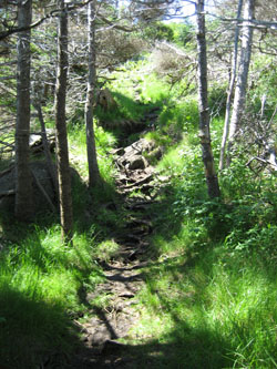 Monhegan Hiking Trail