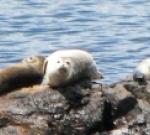 20060613105742_seals