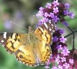 monarch-582x284