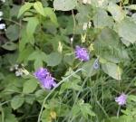 monhegan-flowers7-medium